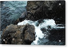 Concealed Acrylic Print