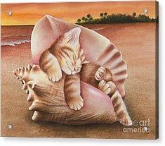 Conch Kitten Acrylic Print