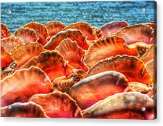 Conch Parade Acrylic Print by Jeremy Lavender Photography
