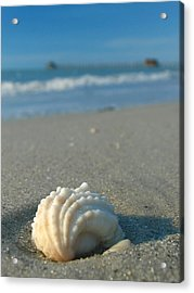 Conch Shell Acrylic Print by Juergen Roth