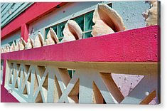 Conch Shells On A Pink Wall - Ambergris Caye, Belize Acrylic Print