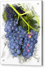 Acrylic Print featuring the painting Concord Grape by Ivana Westin