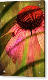 Cone Flower And The Ladybug Acrylic Print