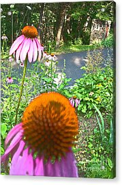 Cone Flowers And Others Acrylic Print by Beebe  Barksdale-Bruner