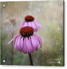 Coneflower Dream Acrylic Print by Nina Silver