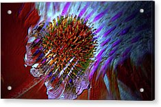 Acrylic Print featuring the photograph Coneflower by Irma BACKELANT GALLERIES