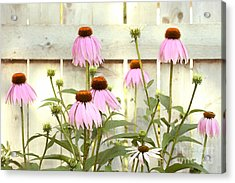 Coneflower Patch Acrylic Print