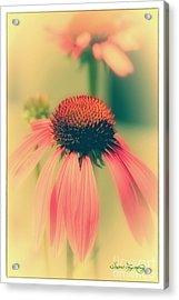 Coneflower Acrylic Print by Susan  Lipschutz