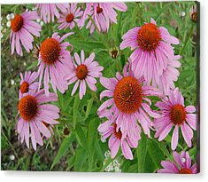 Coneflowers Acrylic Print by Audrey Venute