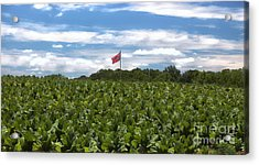 Confederate Flag In Tobacco Field Acrylic Print
