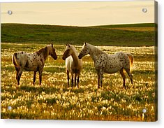 The Conference Acrylic Print