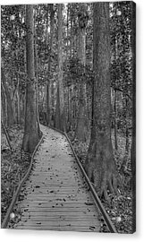 Acrylic Print featuring the photograph Congaree 2017 03 Bw by Jim Dollar