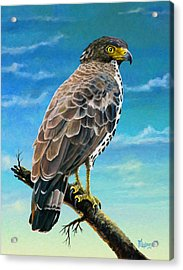 Congo Serpent Eagle Acrylic Print by Anthony Mwangi