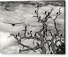 Congress Of Vultures Acrylic Print