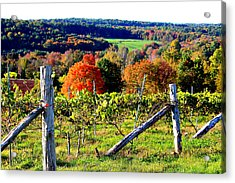 Connecticut Winery Acrylic Print