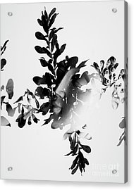 Connection To All That Is Acrylic Print by Jorgo Photography - Wall Art Gallery