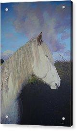 Connemara Pony Acrylic Print by Eamon Doyle