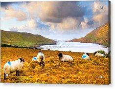Connemara Sheep Grazing Over Killary Fjord Acrylic Print by Mark E Tisdale
