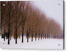 Connolly Trees Acrylic Print