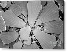 Conservatory Nature In Black And White 1 Acrylic Print by Carol Groenen