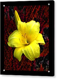 Consider The Lily Acrylic Print by EGiclee Digital Prints