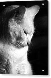 Contempation  Acrylic Print by Bob Orsillo