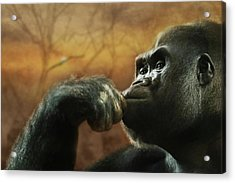 Acrylic Print featuring the photograph Contemplation by Lori Deiter