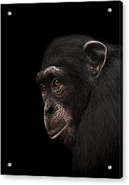 Contemplation Acrylic Print by Paul Neville