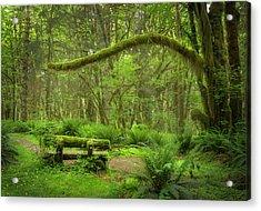Contemplative Rain Forest Acrylic Print