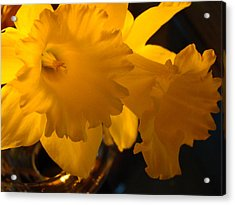 Contemporary Flower Artwork 10 Daffodil Flowers Evening Glow Acrylic Print by Baslee Troutman