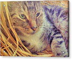 Content Acrylic Print by JAMART Photography