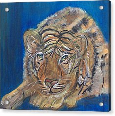 Contented Tiger Acrylic Print by Mikki Alhart