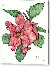 Contour Double Hibiscus Acrylic Print by Edward Ruth