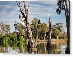 Acrylic Print featuring the photograph Contrasted by Douglas Barnard