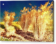 Contrasts Acrylic Print by Michael Putnam