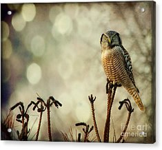 Convenient Perch Acrylic Print by Heather King