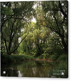 Cook County Forest Preserve No 6 Acrylic Print by Kathy McClure