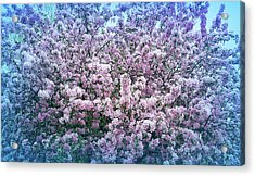 Cool Blue Crab Apple Tree Acrylic Print