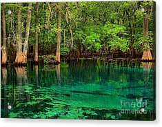 Cool Blue Manatee Spring Waters Acrylic Print by Adam Jewell