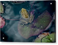 Cool Frog-hot Day Acrylic Print