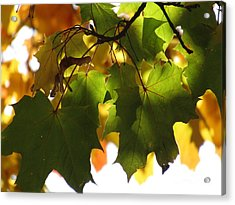 Cool In The Shade Acrylic Print