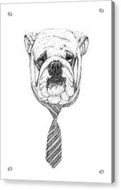 Cooldog Acrylic Print by Balazs Solti