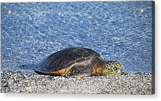 Acrylic Print featuring the photograph Cooling Off by Pamela Walton