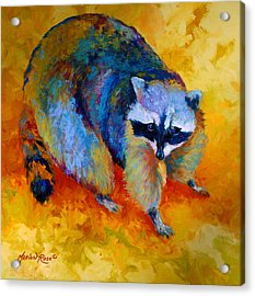 Coon Acrylic Print by Marion Rose