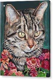 Cooper The Cat Acrylic Print by Enzie Shahmiri