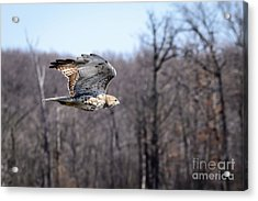 Coopers Hawk 3 Acrylic Print by Patrick Shupert