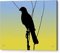 Coopers Hawk Silhouette At Sunrise Acrylic Print
