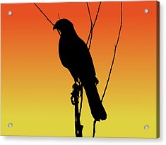 Coopers Hawk Silhouette At Sunset Acrylic Print