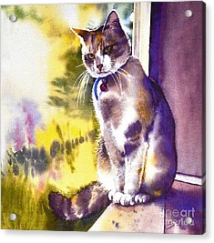 Coops The Cat Acrylic Print