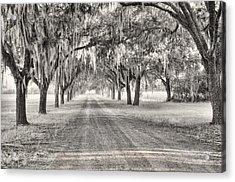 Coosaw Plantation Avenue Of Oaks Acrylic Print